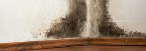 mold removal from walls