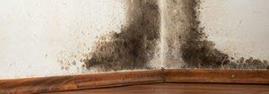 mold damage cleanup