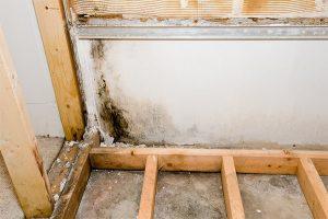 mold remediation hidden mold