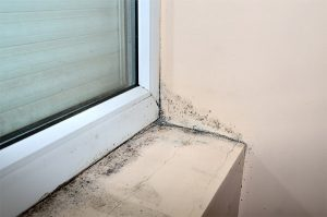 mold removal moldy windowsill