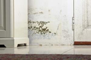 water damage cleanup filion, water damage restoration filion, water damage filion,