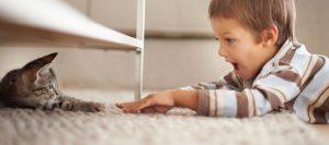 clean carpet pet hair