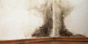 Lapeer Mold Remediation