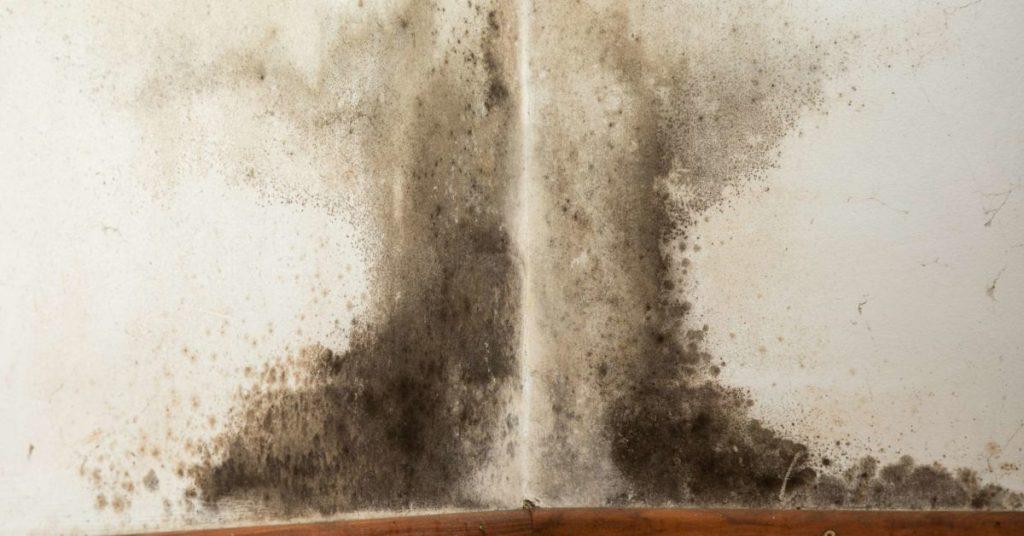 Mold remediation service Lapeer, MI