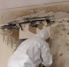 Mold remediation Grand Blanc